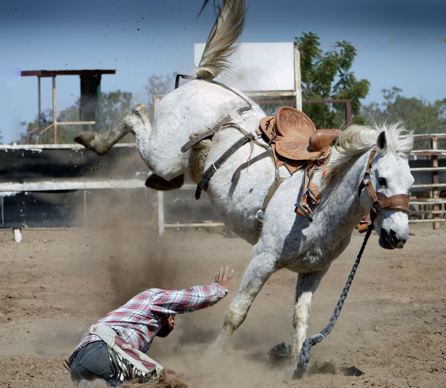 action animal bronco bucking