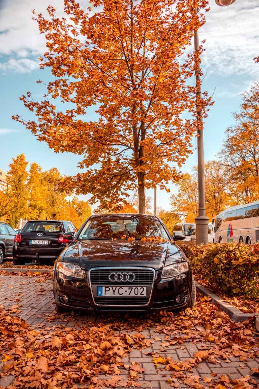 black audi vehicle parked near tree